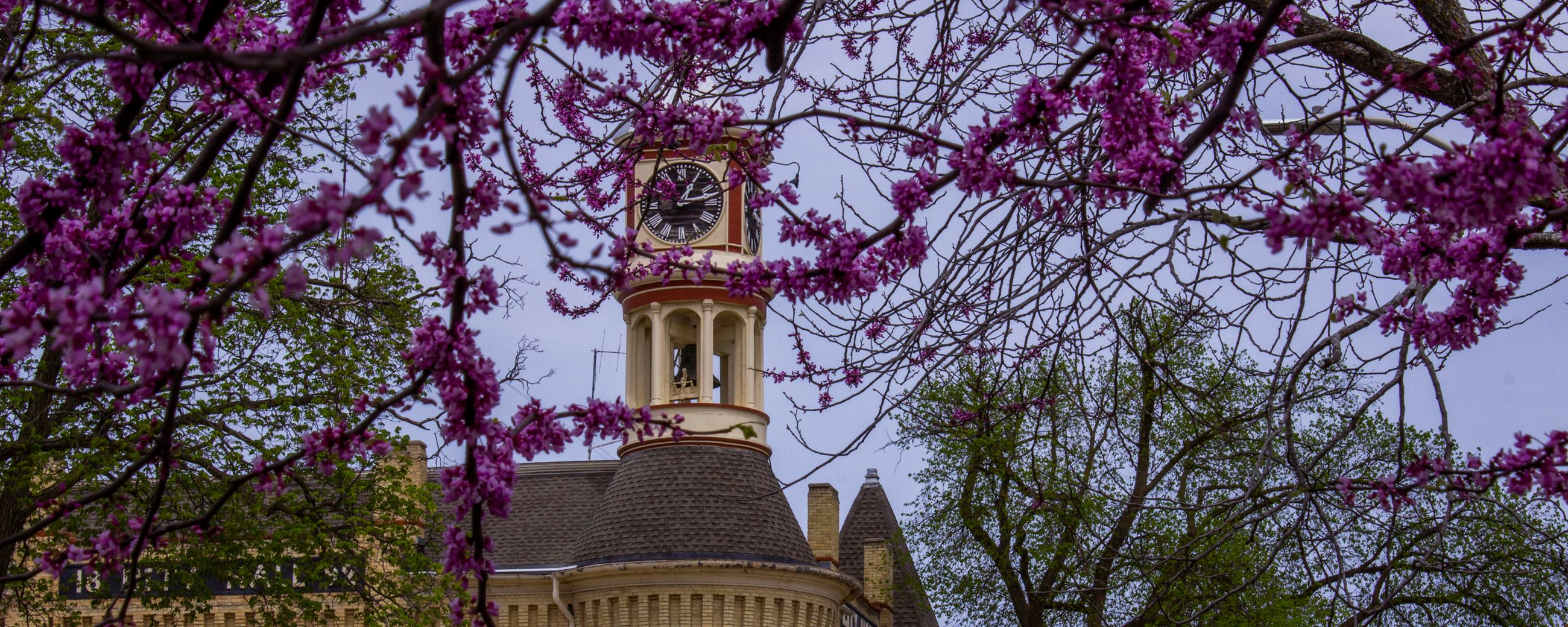 City Hall framed by our beautiful Redbud trees.